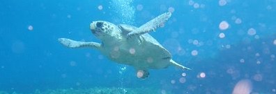 Image_turtle_Wildlife Page content